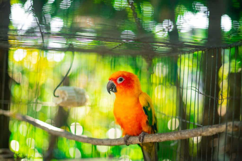 A parrot inside a cage