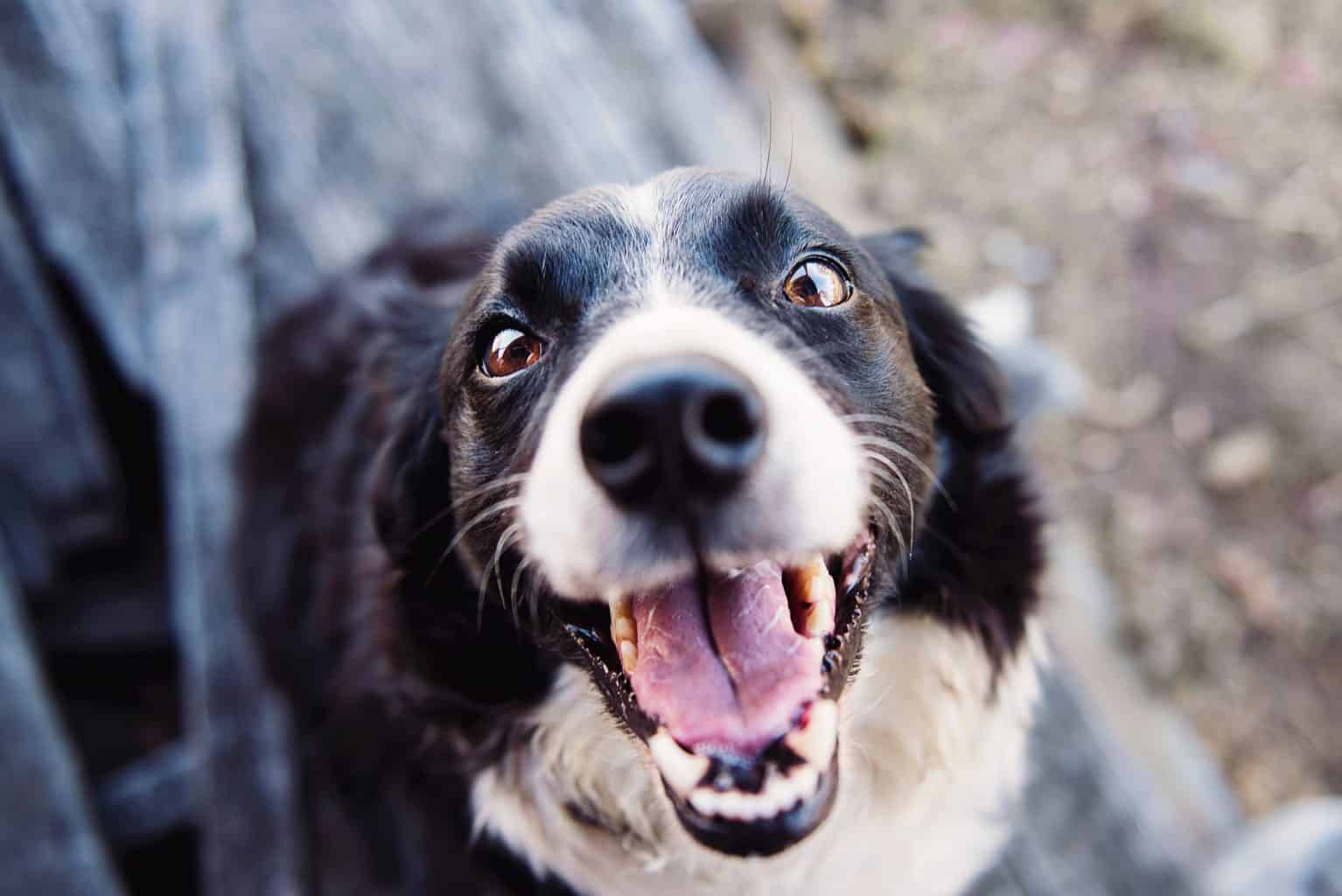 Excited looking dog