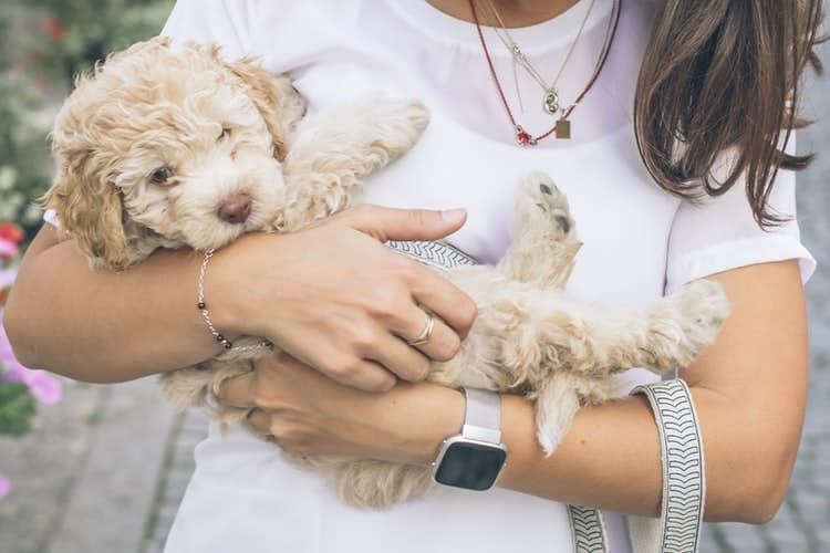 Woman cradling her puppy after getting his yearly booster shot