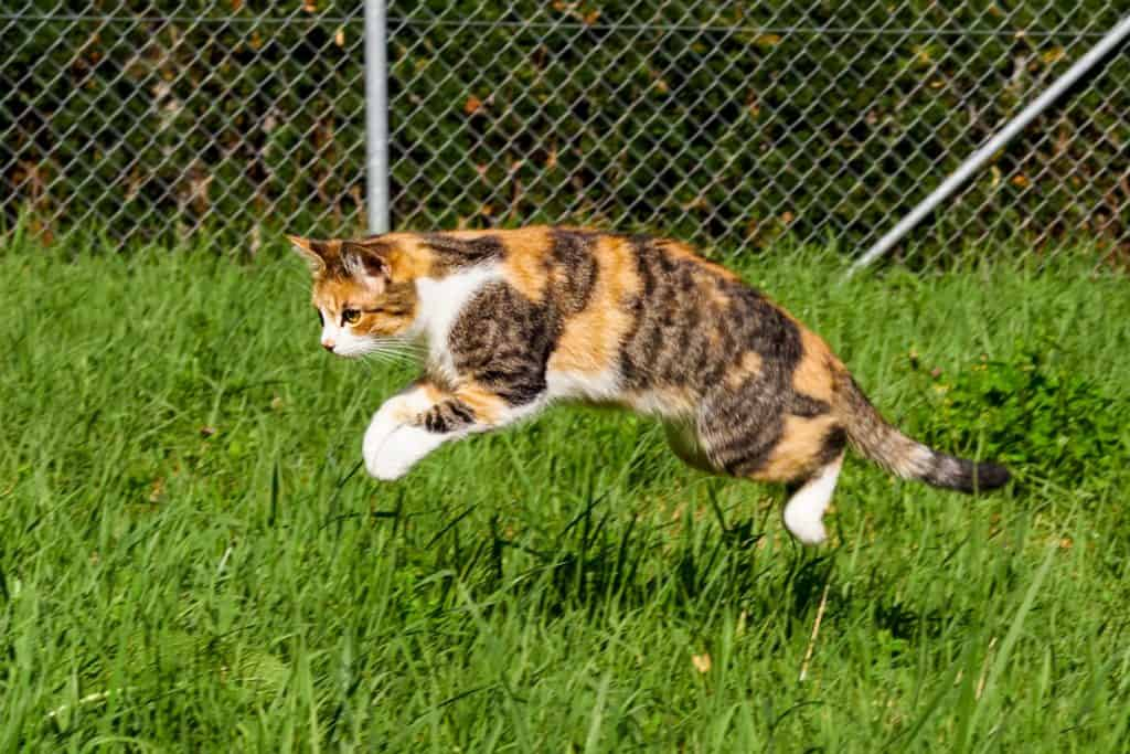 Cat jumping on grass during daytime