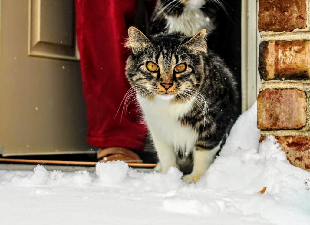 Cat in front of door surrounded with snow